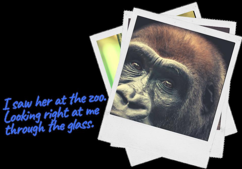 Blog.Gorilla Through Glass-3.png