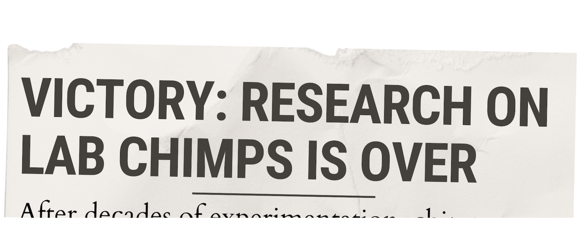 Newspaper Clipping.Victory Lab Chimps.png
