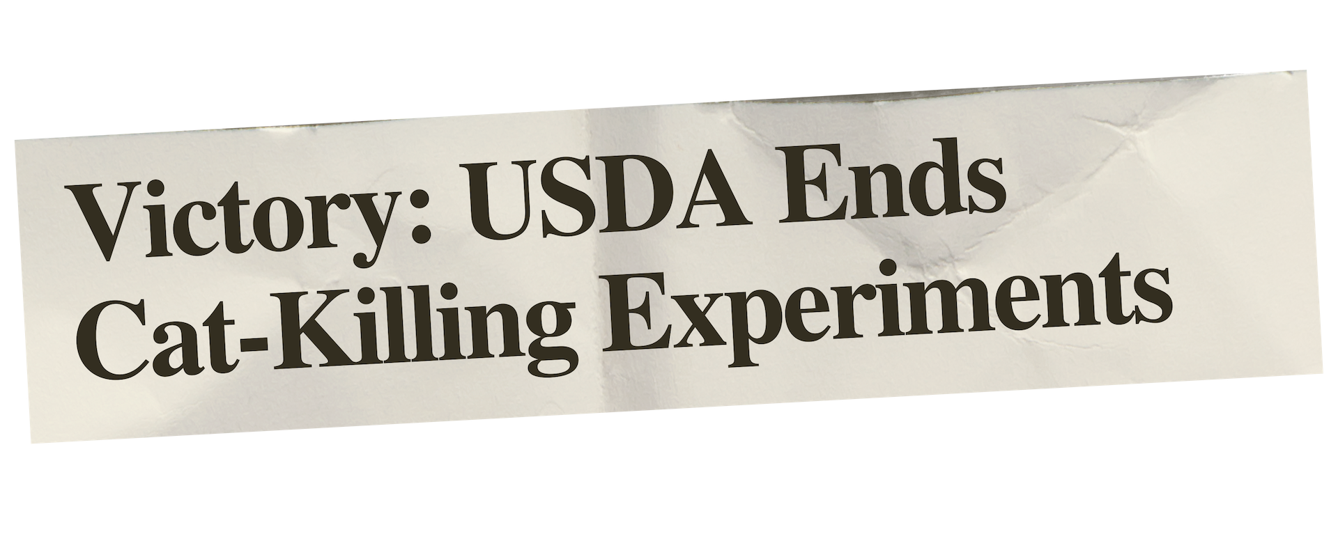 Newspaper Clipping.Victory Cat-Killing Experiments.png