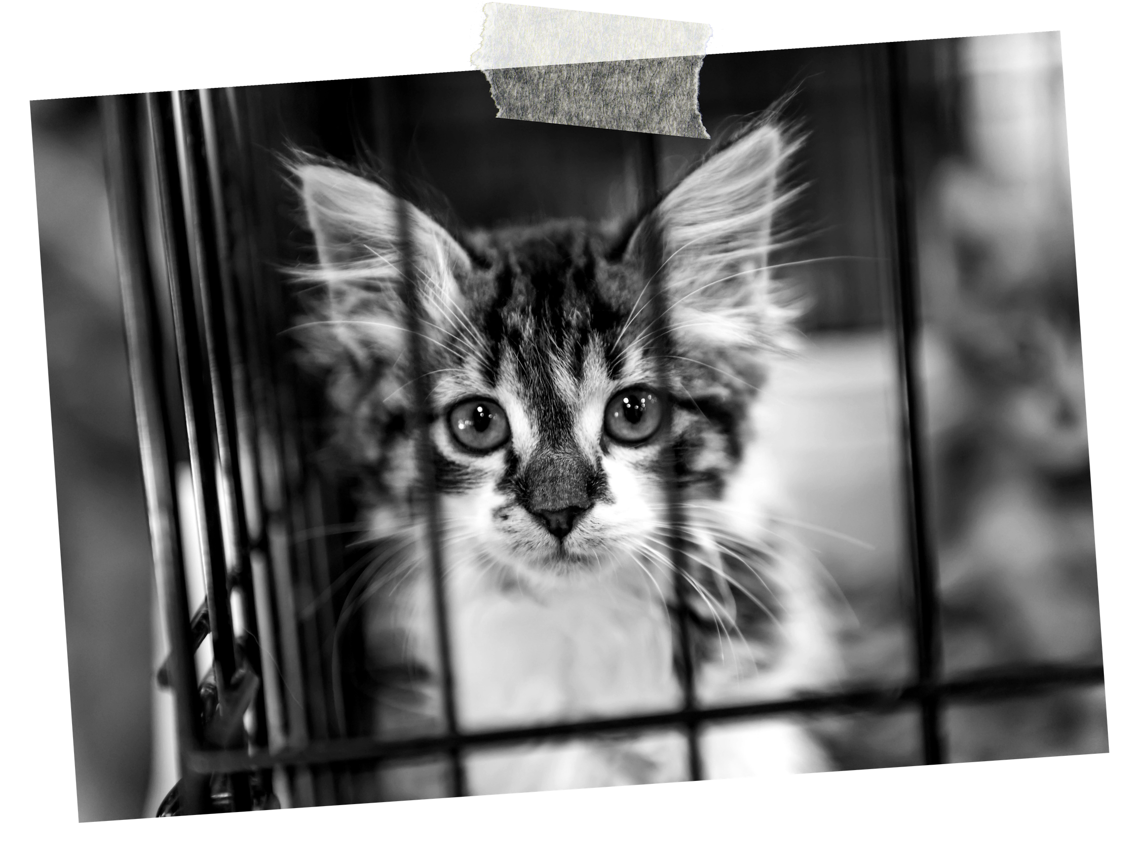2. LEGAL or ILLEGAL?Researchers sever part a cat's spinal cord and forced it to walk on a treadmill. -