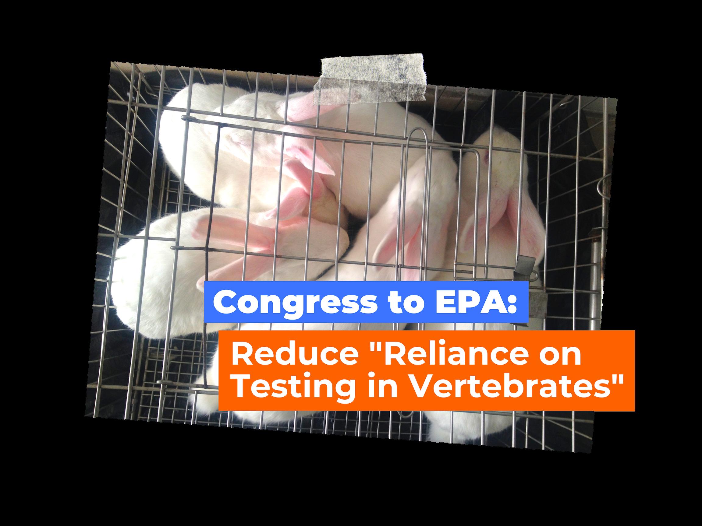 Blog.Congress Tells EPA to Reduce Testing on Vertebrates.png