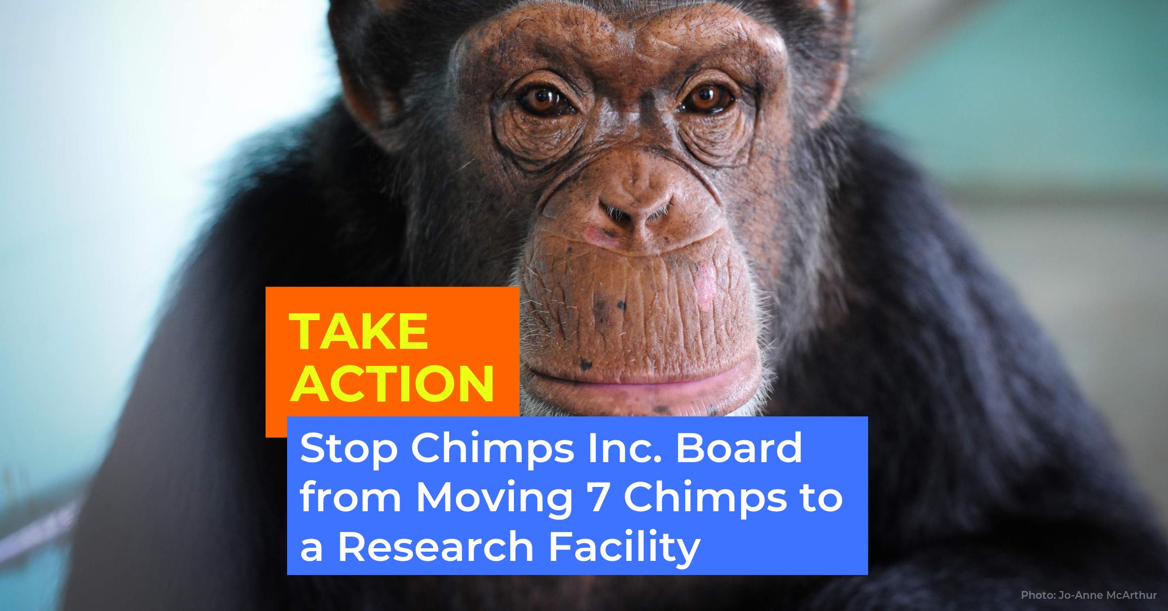 Take Action.Chimps Inc .png