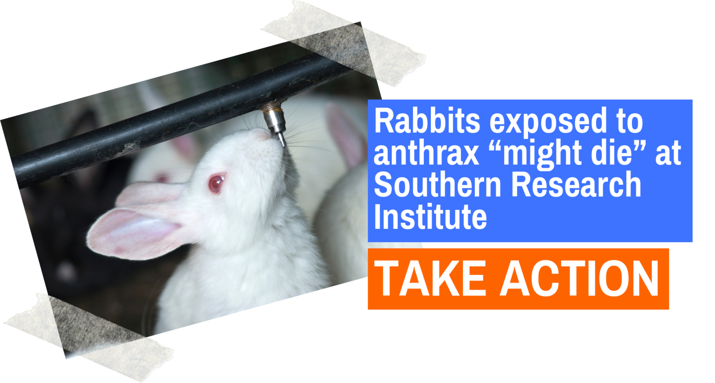 rabbit banner take action.png