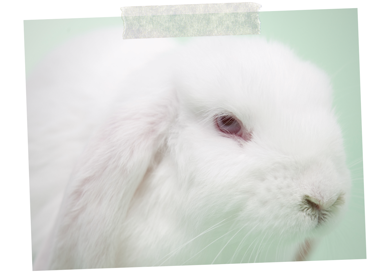 MassachusettS RESIDENTS: Help End Cosmetics Testing on Animals - Every year, tens of thousands of animals suffer and die in product testing in the United States. Urge Massachusetts legislators to support these refiled bills that would require the use of test methods that replace, reduce, or refine animal testing of products and ingredients when they are available and provide information of equivalent or better scientific quality and relevance for the intended purpose.
