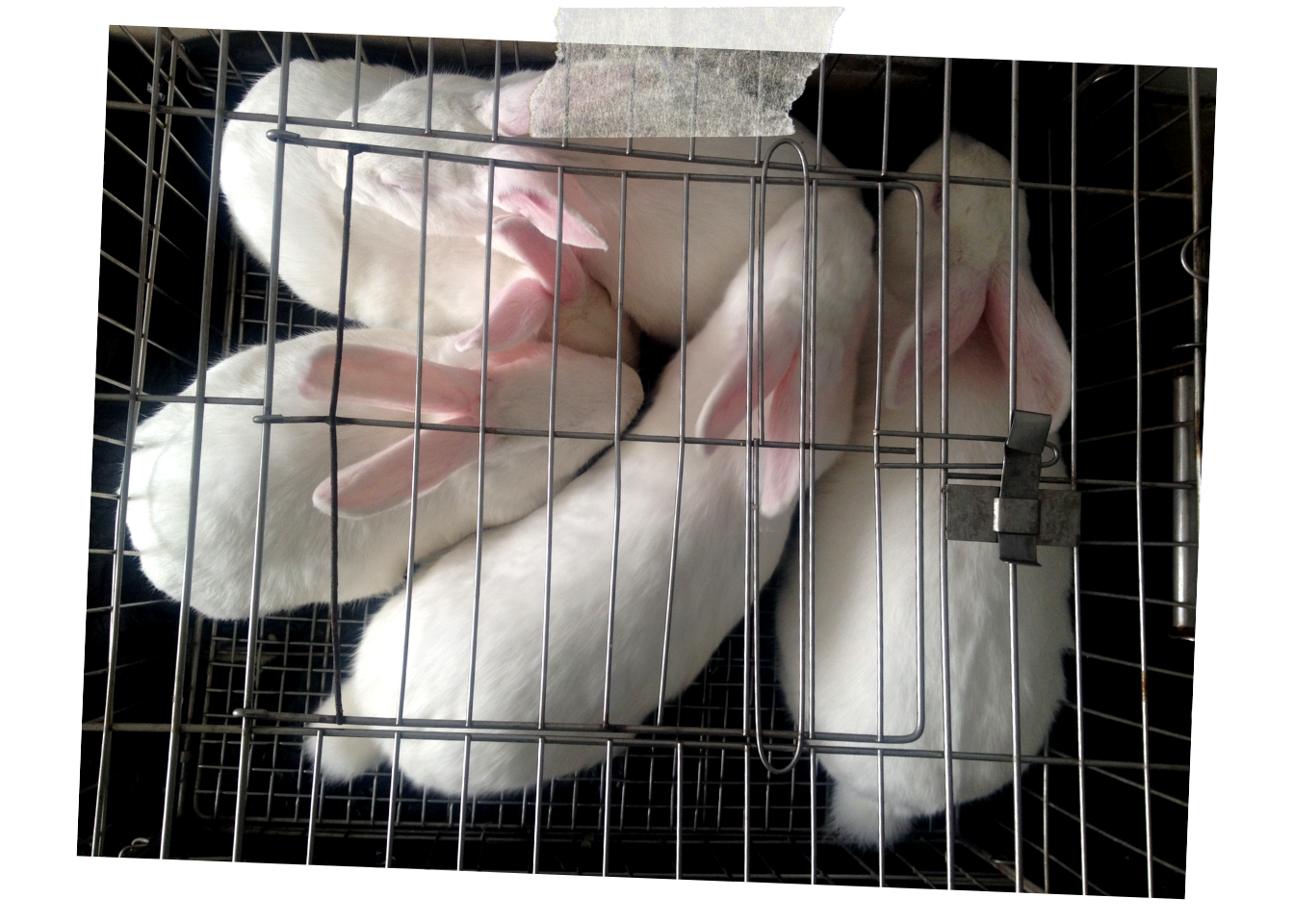 Urge China to End to Animal Testing for Cosmetics - Take a moment to email Terry Branstad, the U.S. Ambassador to China, urging him to work with the Chinese government to push for revised regulations permitting the sale of imported cruelty-free cosmetics.
