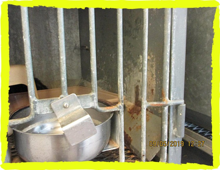 Rusting cage that confines cats at Young Veterinary Research Services, September 2019