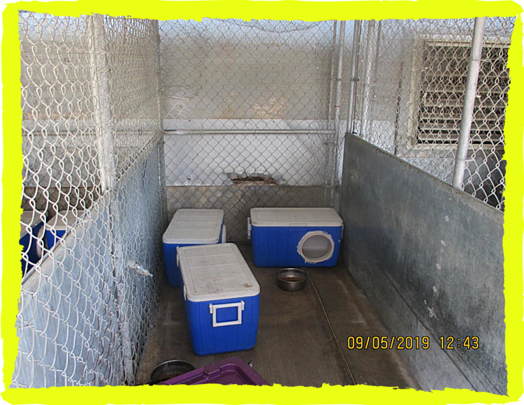 Cage with shelters made from coolers for a group of cats at Young Veterinary Research Services, September 2019