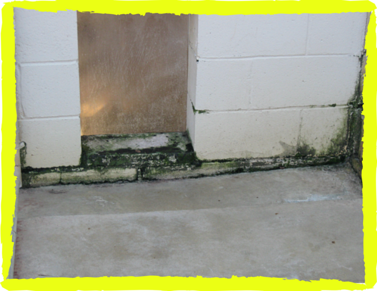 """""""Green fuzzy material"""" growing in the dog runs at Kennelwood, Inc., December, 2019"""
