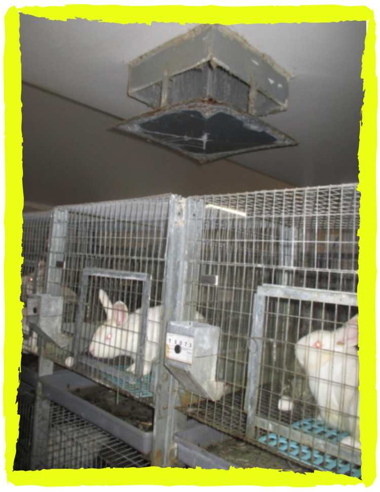 Rabbit fur caked onto everything, like a swamp cooler that can no longer be sanitized, at Antibodies Inc., March 2019