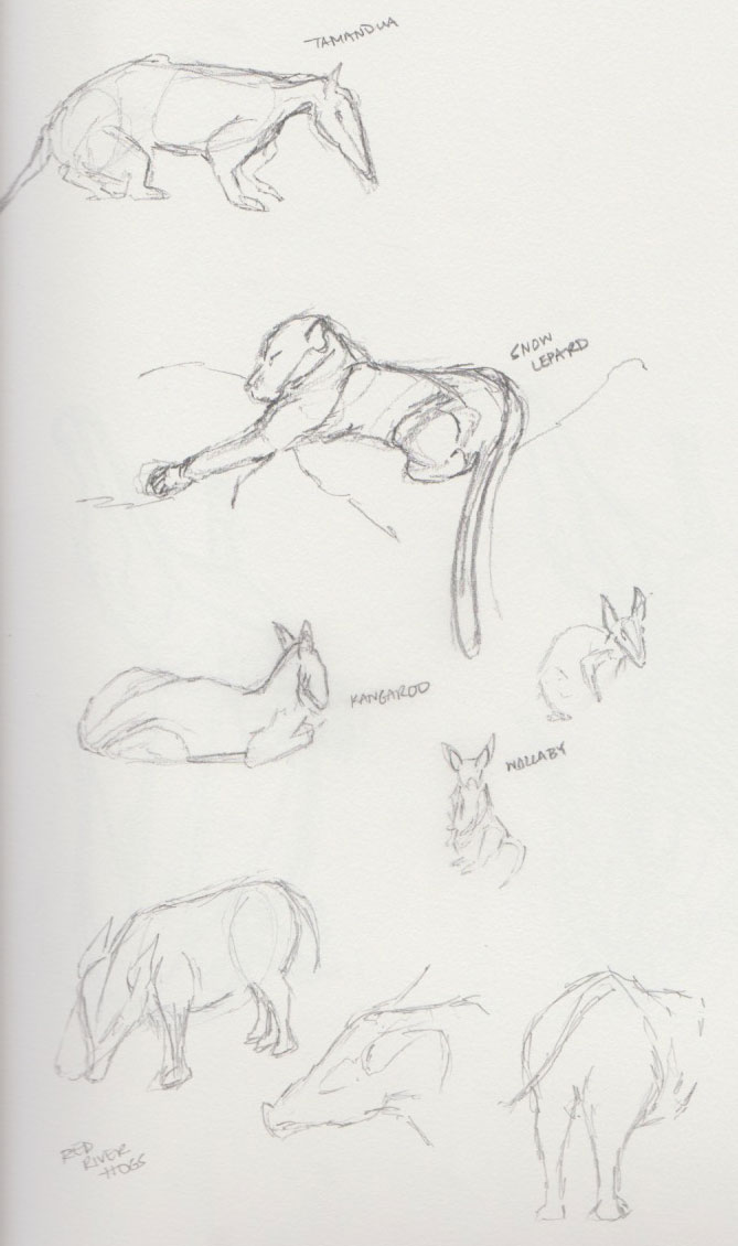 Zoo Animal Sketches