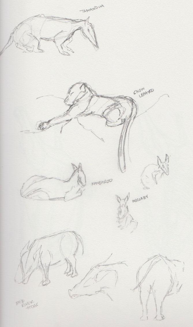 Zoo Animal Sketches