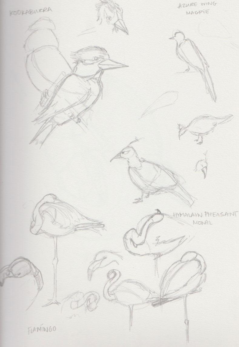 Bird Zoo Animal Sketches