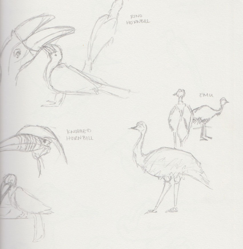 Large Bird Zoo Animal Sketches