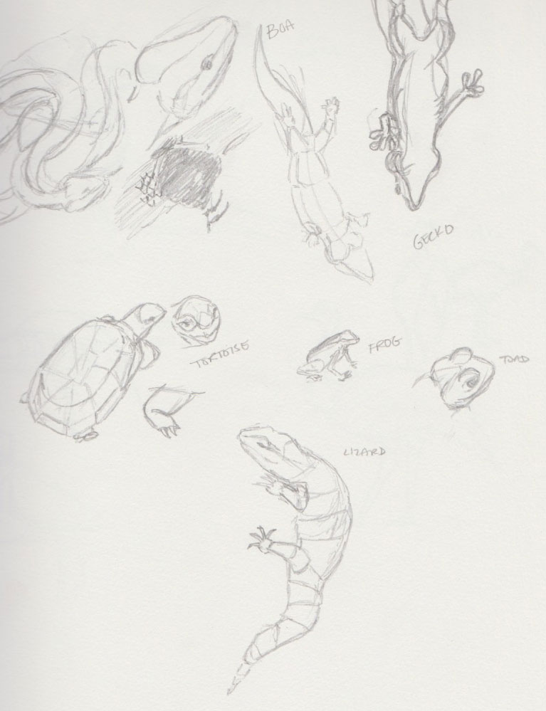 Reptile Zoo Animal Sketches