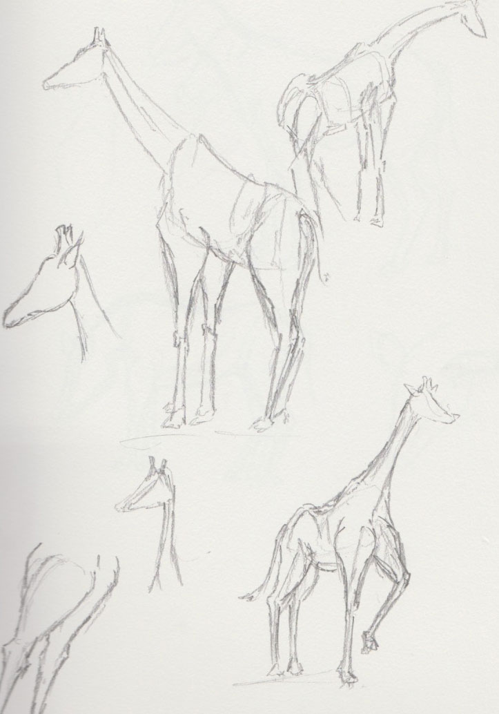 Giraffe Zoo Animal Sketches