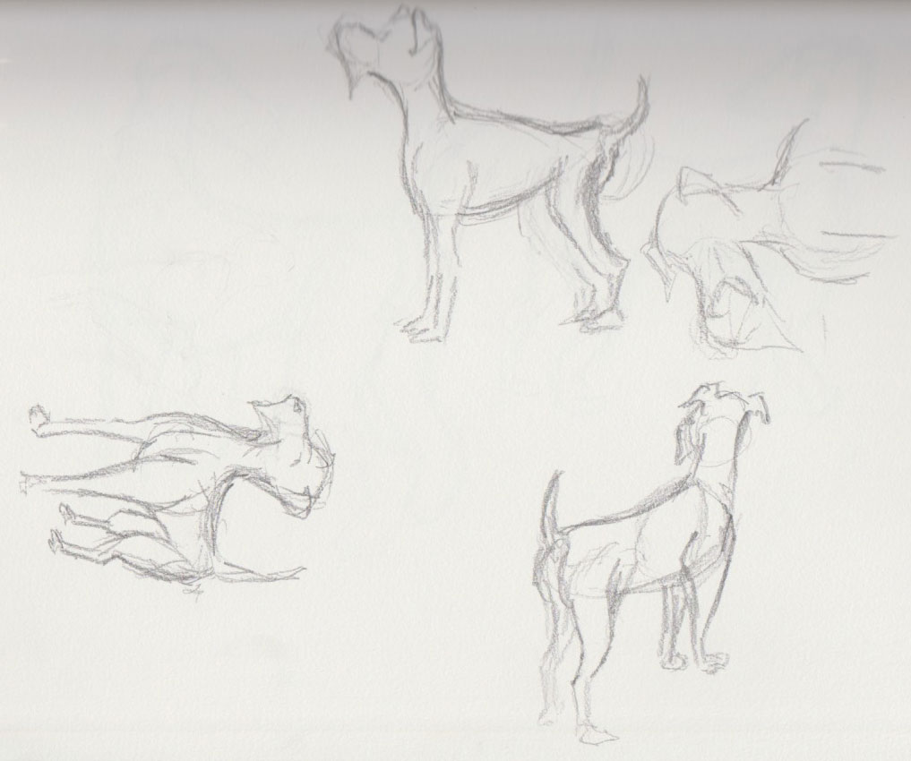 Dog Show Sketches