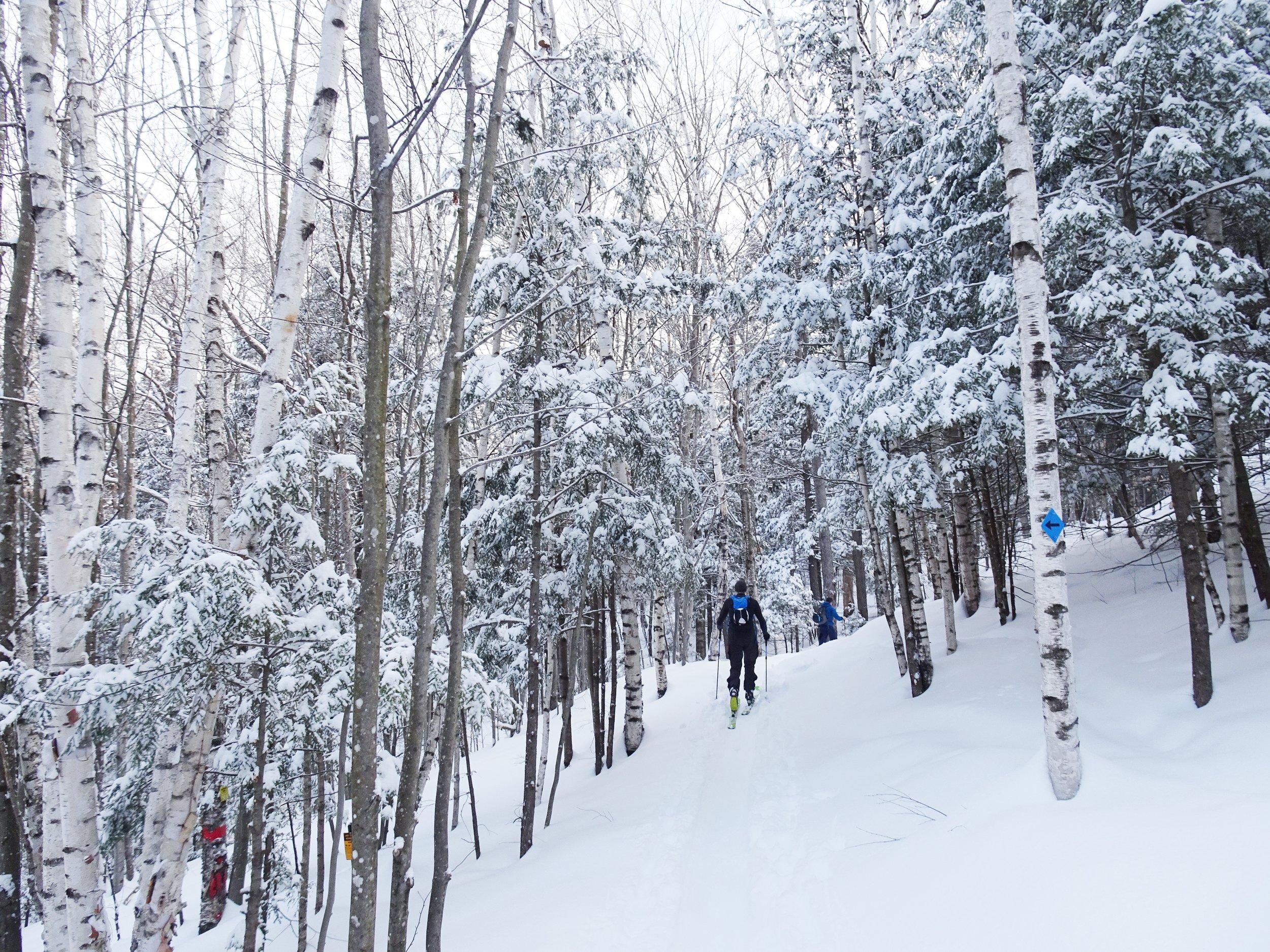 The skin track at the Maple Villa ski glades.  Photo: Ian Wauchope