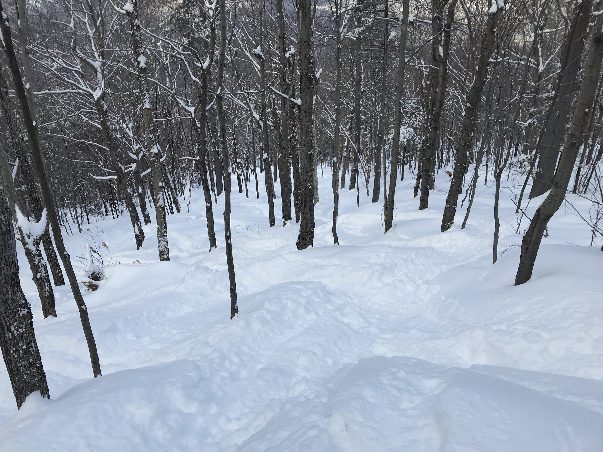 Maple Villa Glade Skiing 2