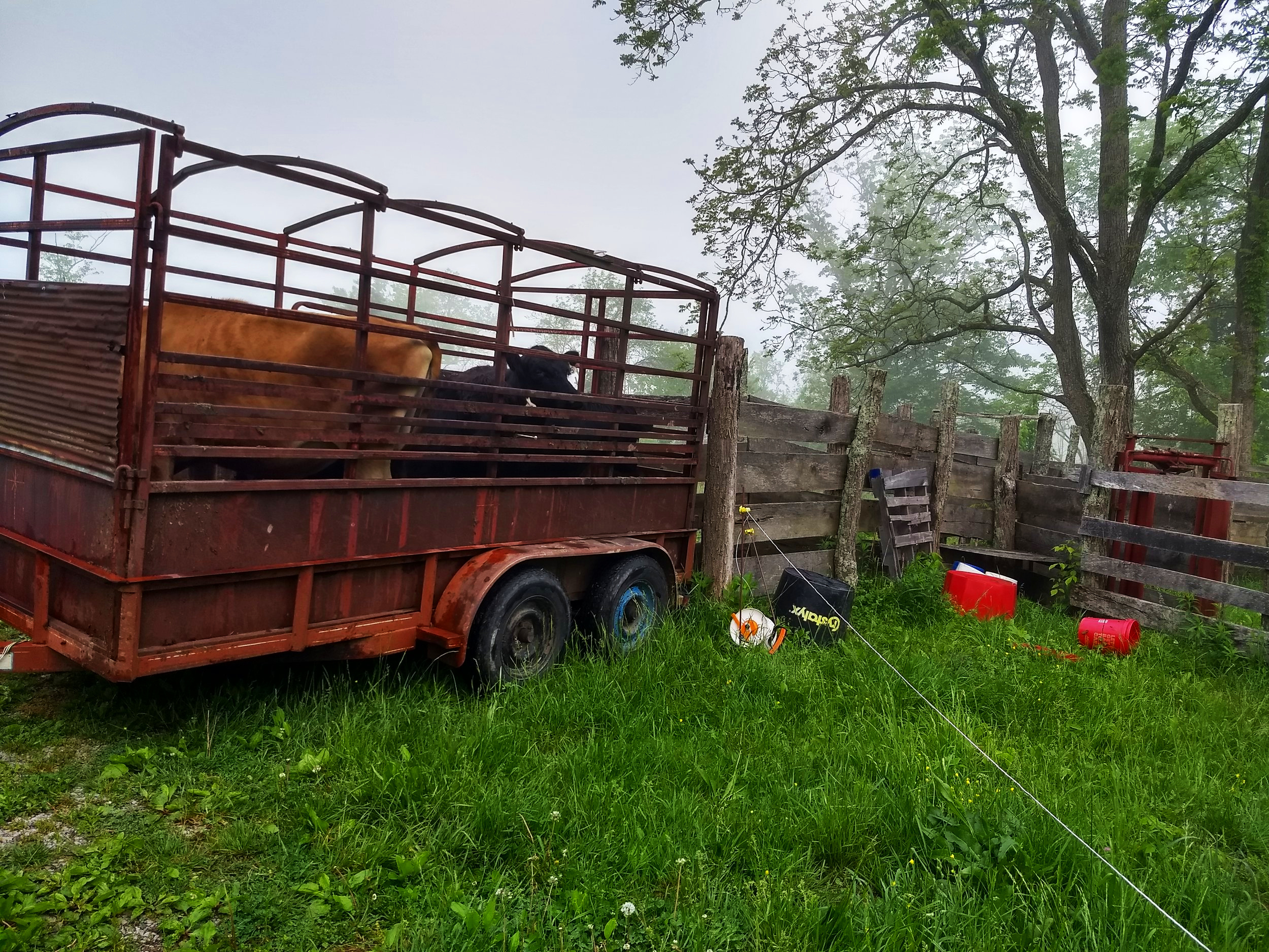 Loading Time - This month we had our Spring beef orders so we moved the cows down to the corral for loading. Everything went smoothly and we got all the cows going for beef loaded and everyone else settled back in the field.