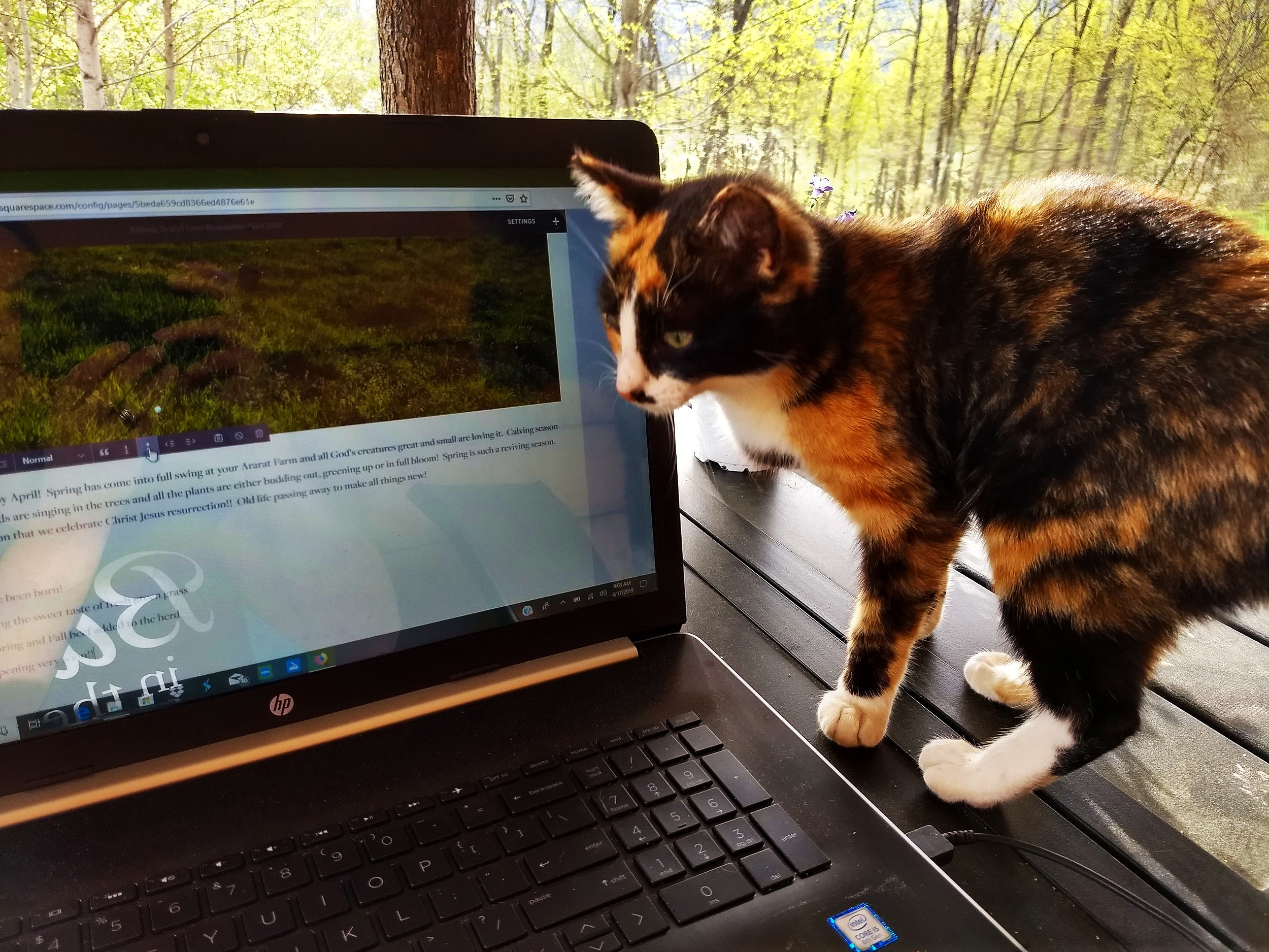 Final words - We hope that you all enjoyed the update on your farm. Matt and Lauren are expecting their first child the end of this month so hopefully we will be able to keep up with the emails and newsletter. Perhaps our kitty Boogie can help this next month. Thank you!Your Ararat Farm!