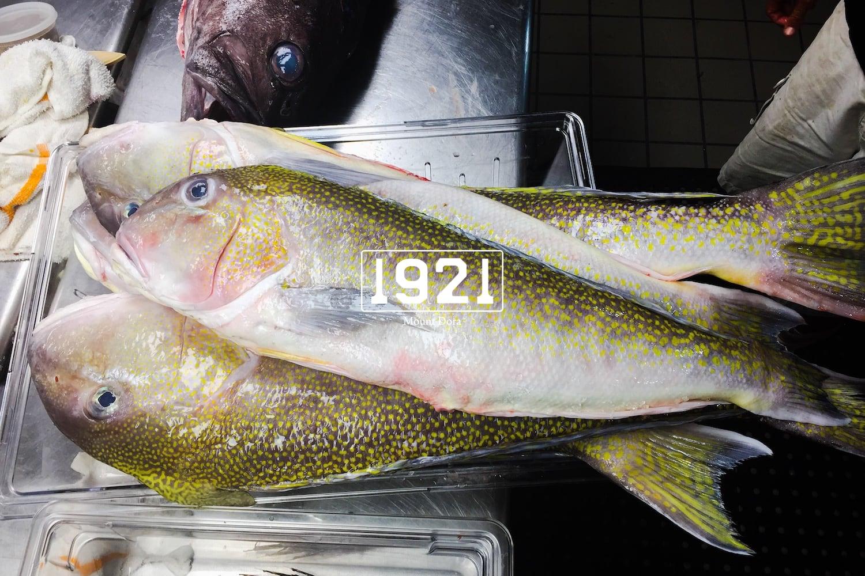 1921 8 fresh fish Image-1-1 copy.jpg