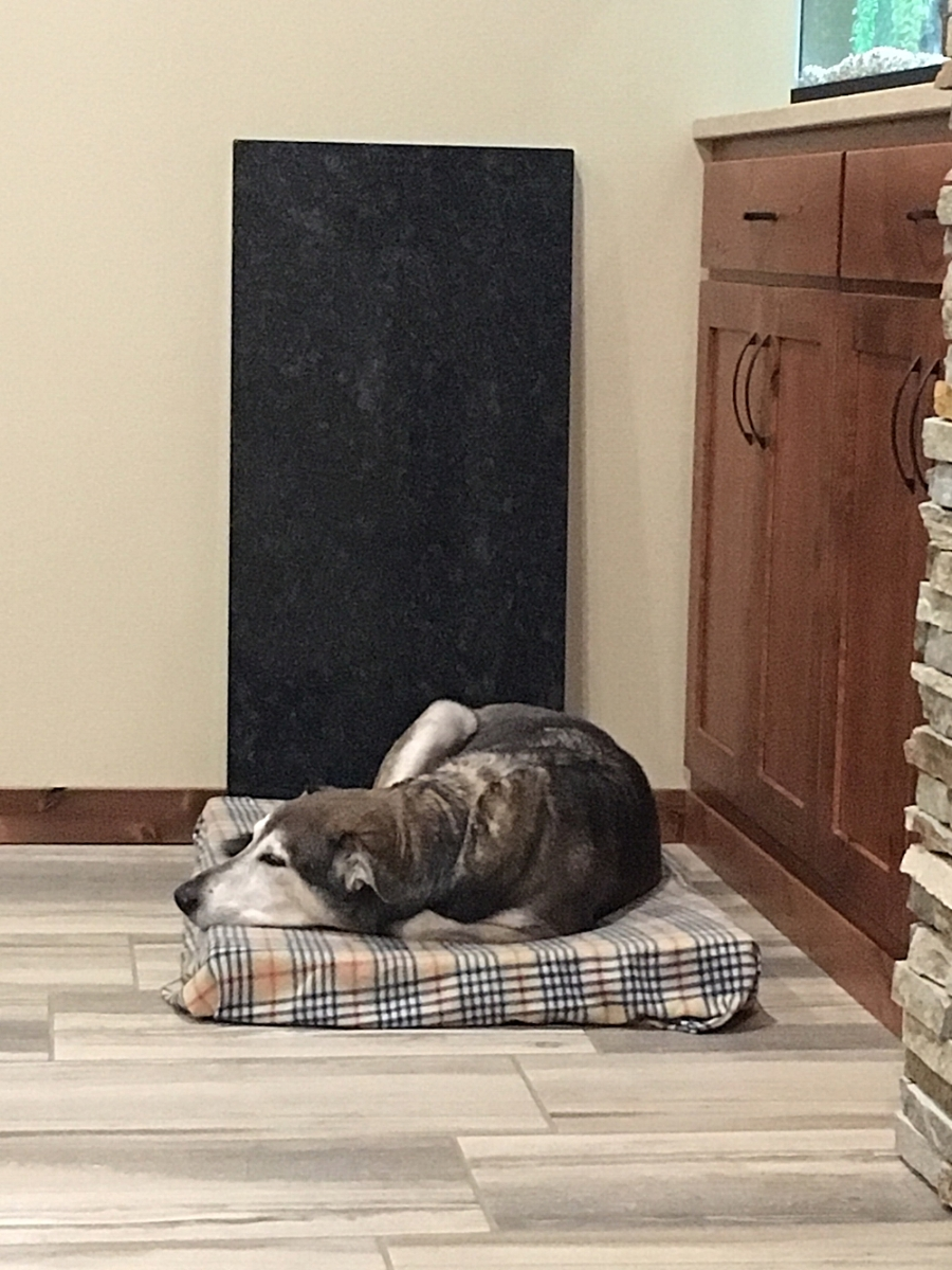 Nap Time - This is Sargents favorite spot… warm, quiet and safe.