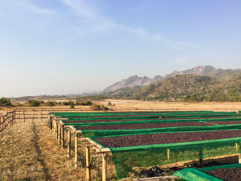 Drying racks in southern Shan State, Myanmar