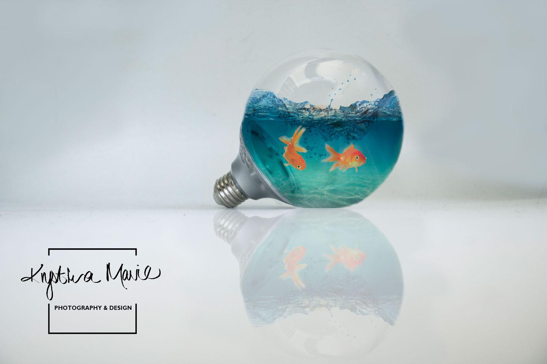 Fish-Bulbeweb.jpg