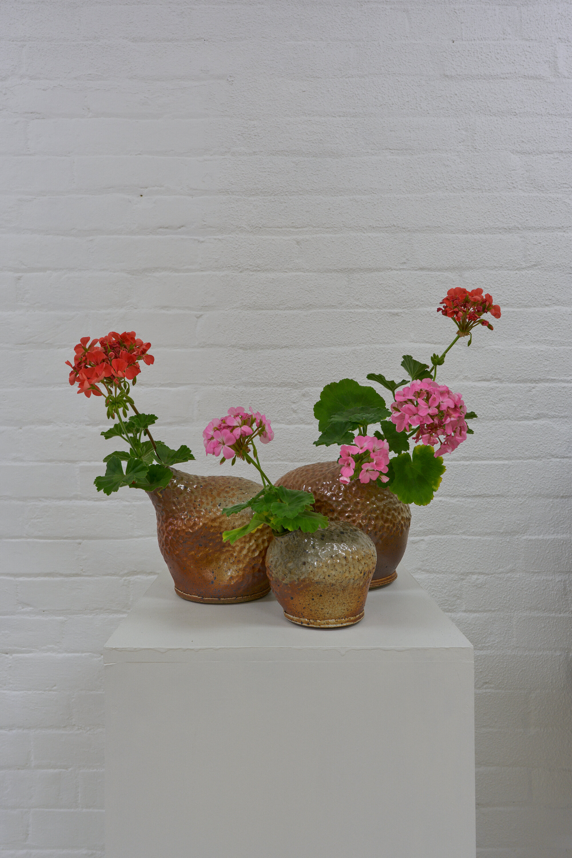20191014_a flat shop [floral arrangements documentation_hannah vorrath-pajak]_DSC06313.jpg