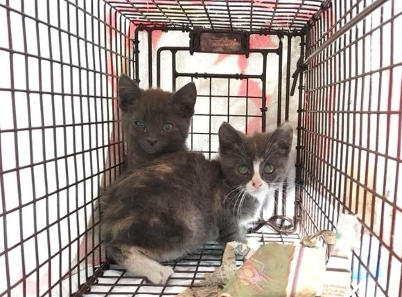 Trap-neuter-return - Can't foster, but want to make a difference for kittens?Join our TNR program to stop the overpopulation of homeless kittens!