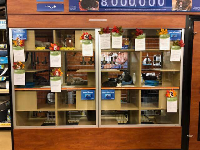 CENTER MAINTENANCE - We currently have kitties that reside in two PetSmart locations.Make their stay a little better by volunteering!