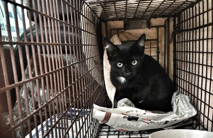 trap-neuter-return - Aiding in preventing the overpopulation of homeless cats and kittens