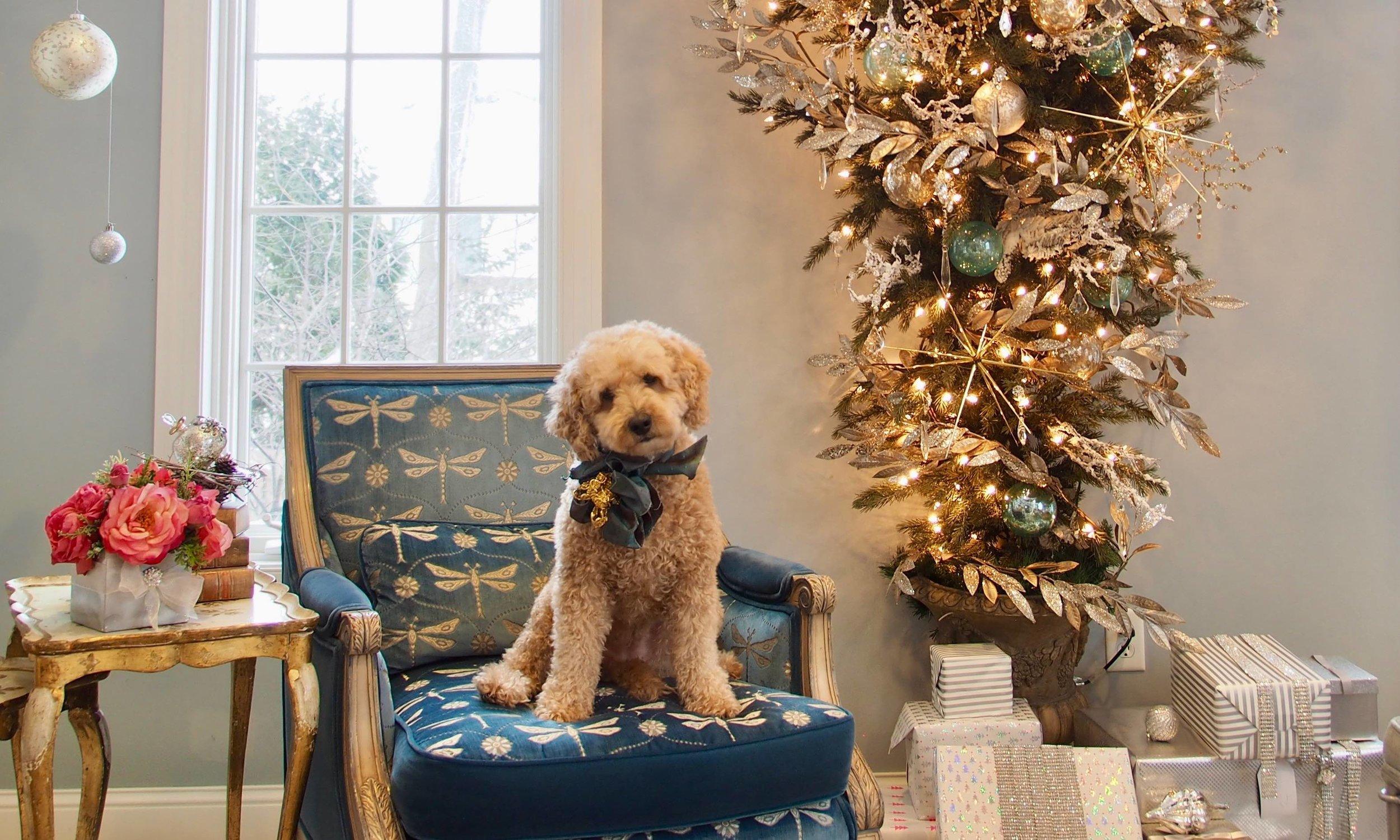 Puppy Christmas.jpg