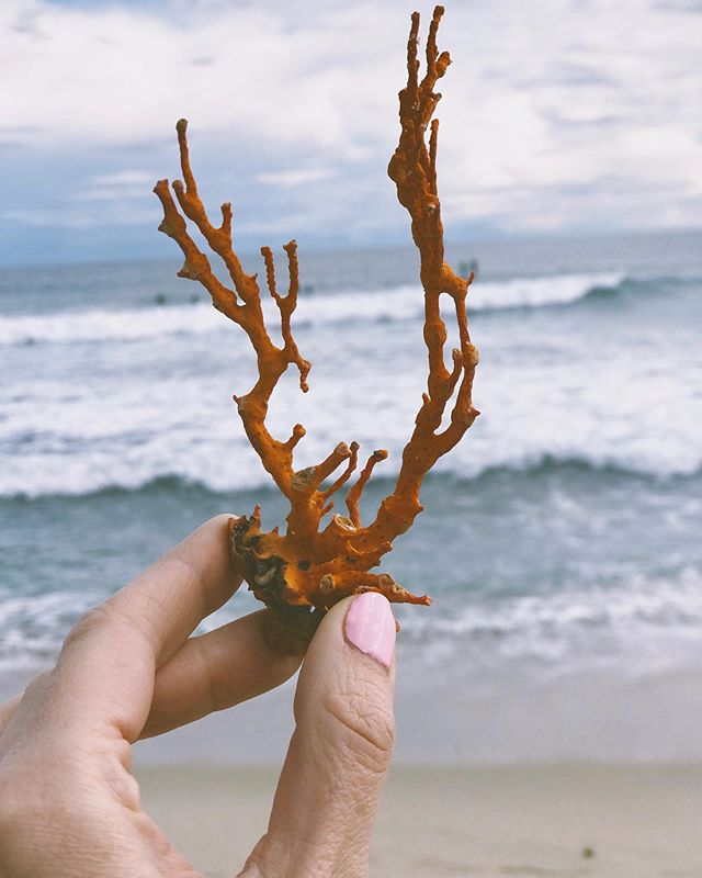 🐚 Nature is the ultimate source of inspiration 🐚