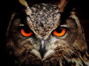 owl-bird-eyes-eagle-owl-86596-300x225.jpg