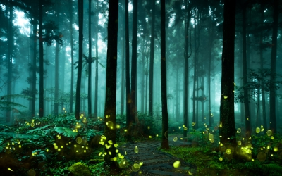 forest_bioluminescence.jpg