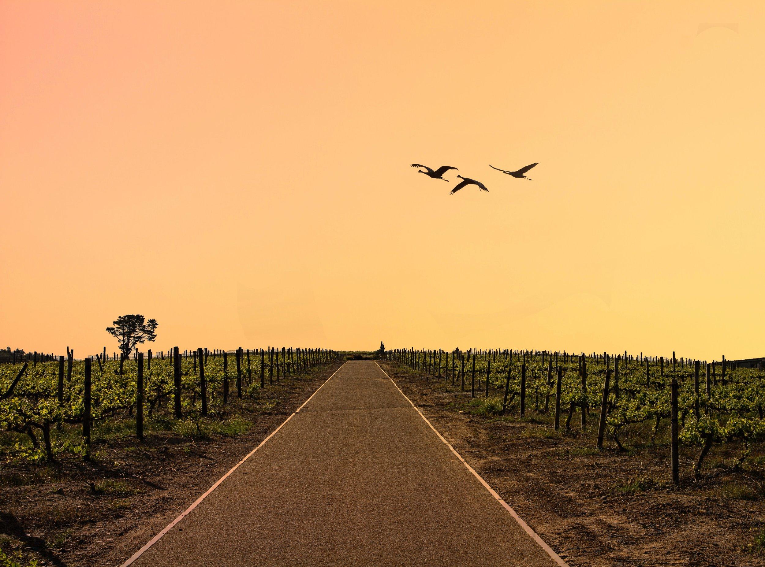 Stellenbosch, the wine route