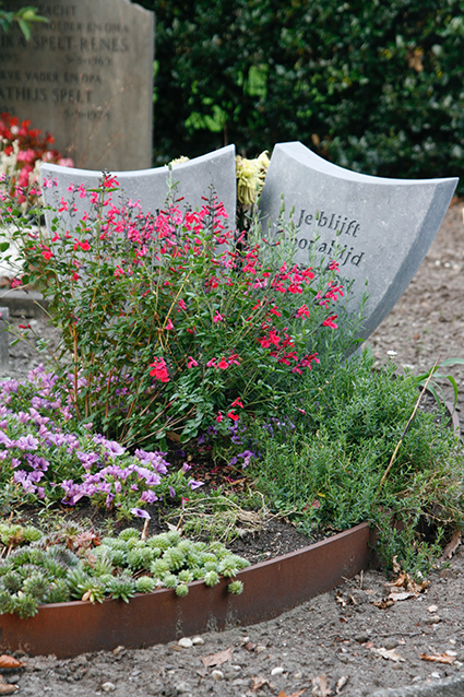 Snow in summer twee jaar later. Het ovaalvormige graf is door eigenaar ingevuld met divers pallet aan vaste planten en kleurrijke bloemen.