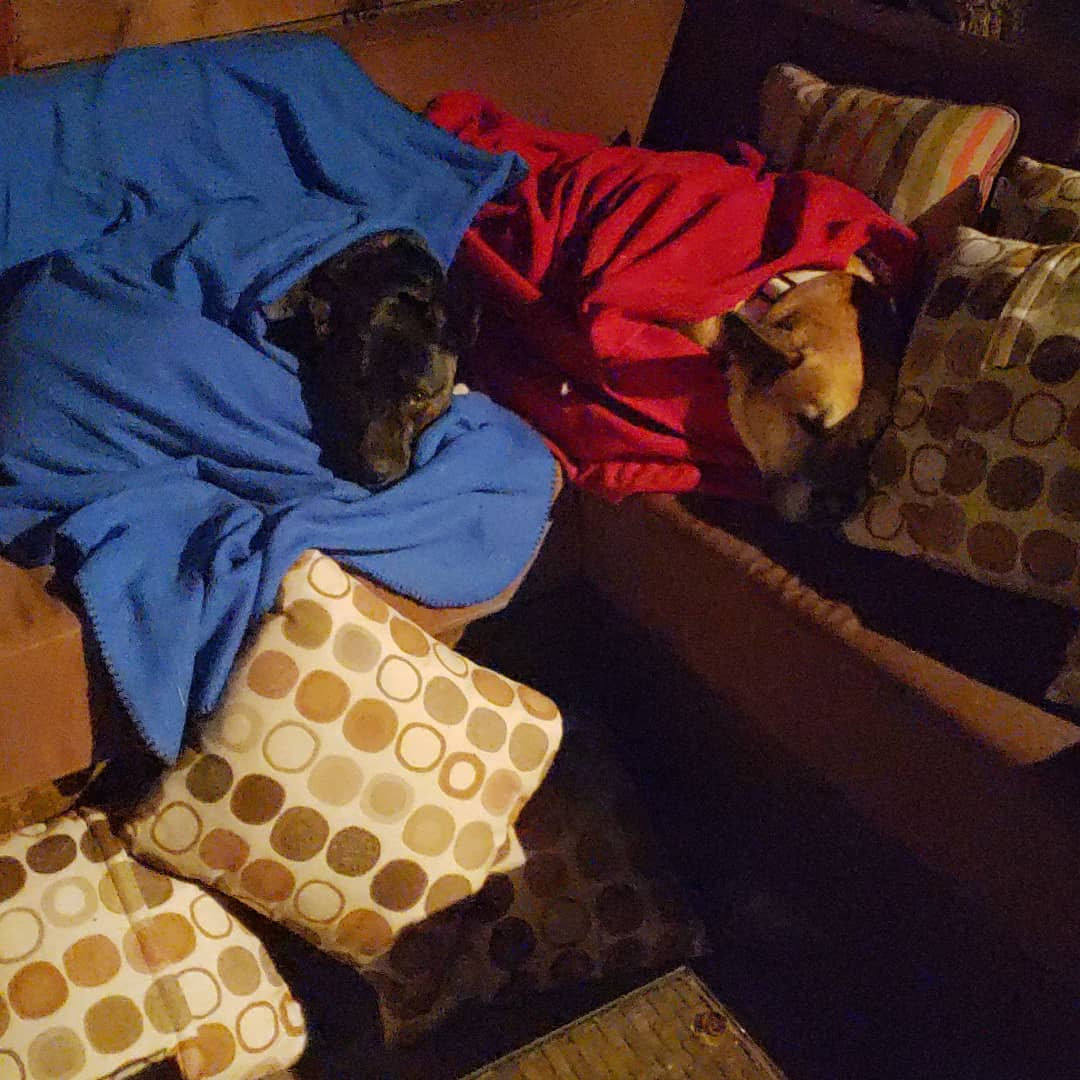 Dogs sleeping on couch // Dog Care, Denver, CO