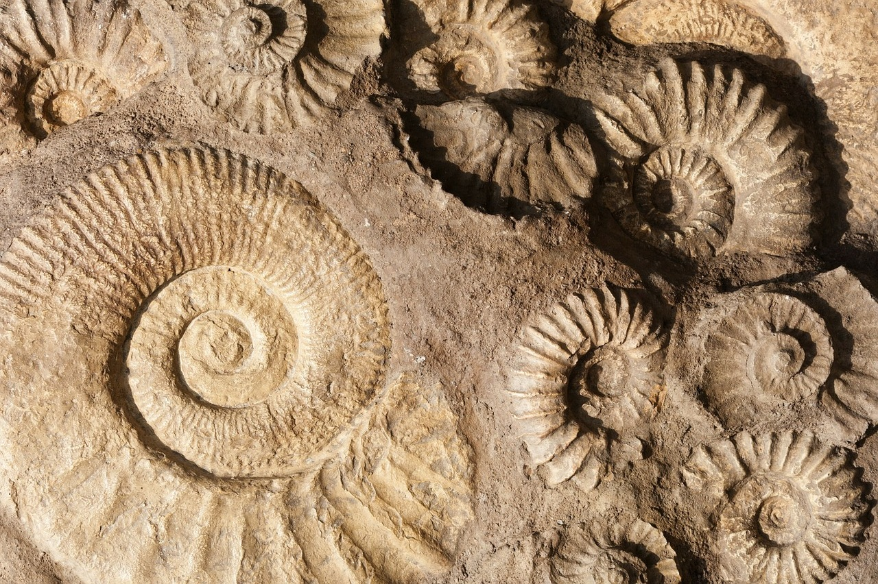 I remember finding shell fossils in gravel as a kid!