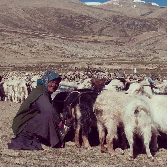 Nomads community near Tso Moriri  #inde #india #bandhan #bandhantravel #agencedevoyageeninde #agencedevoyagefrancophone #voyagesurmesure #voyageeninde  #tailormadetravel #travelphotography #travelindia #travelagency #indianculture  #ladakh #tsomoriri #nomads #nomadscommunity