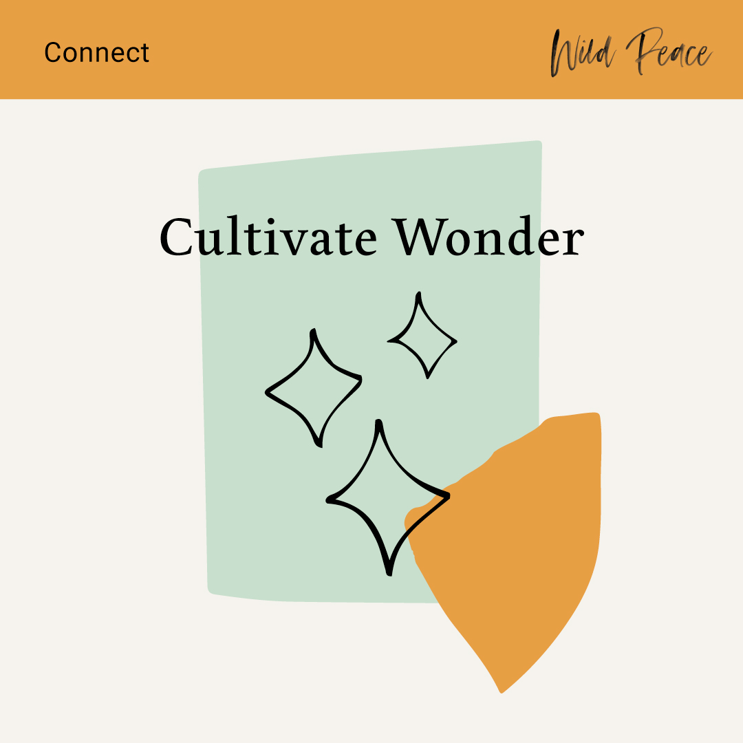 Connect-Cultivate-Wonder.jpg