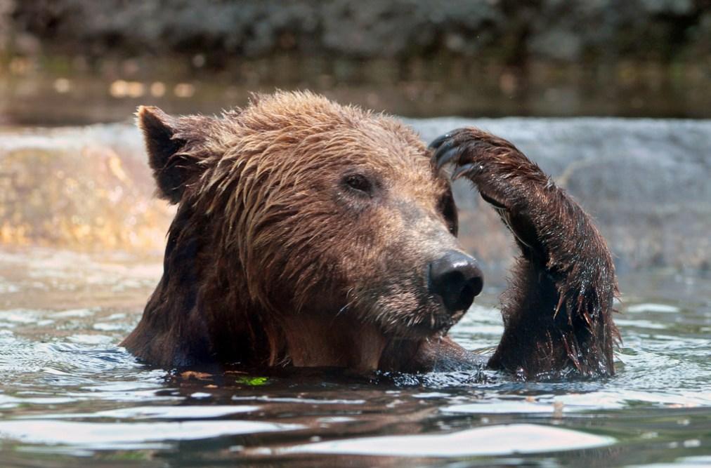 Bear, Forgetting Health Insurance.jpg