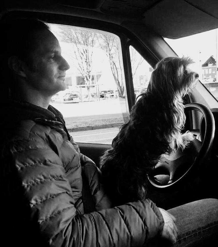 Dürfen Hunde Auto fahren?
