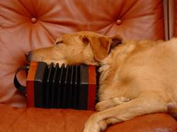 A concertina is the perfect height for a dog nap.