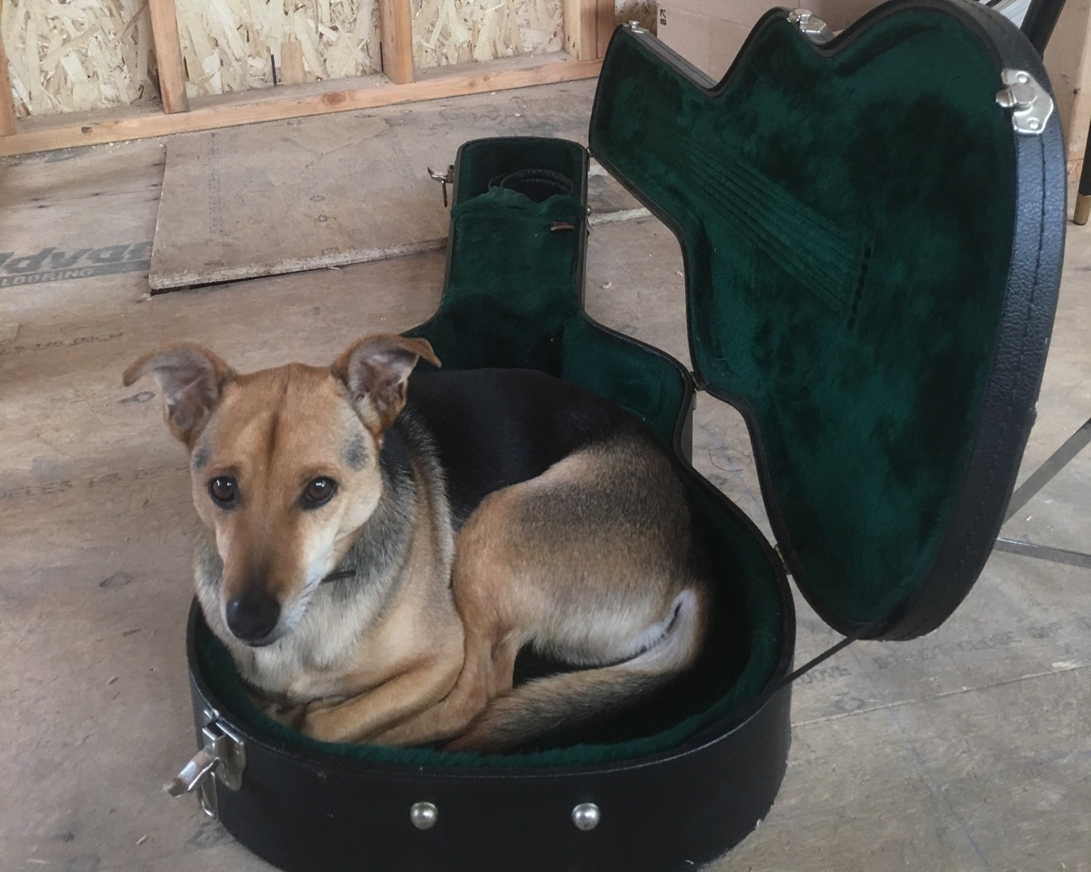 Someone thinks a guitar case is the best seat in the house!
