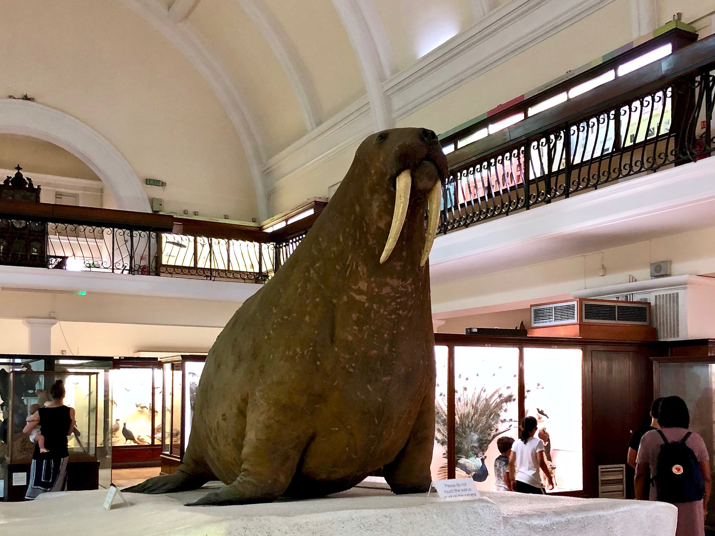 16 Stuffed Walrus at Horniman.jpg