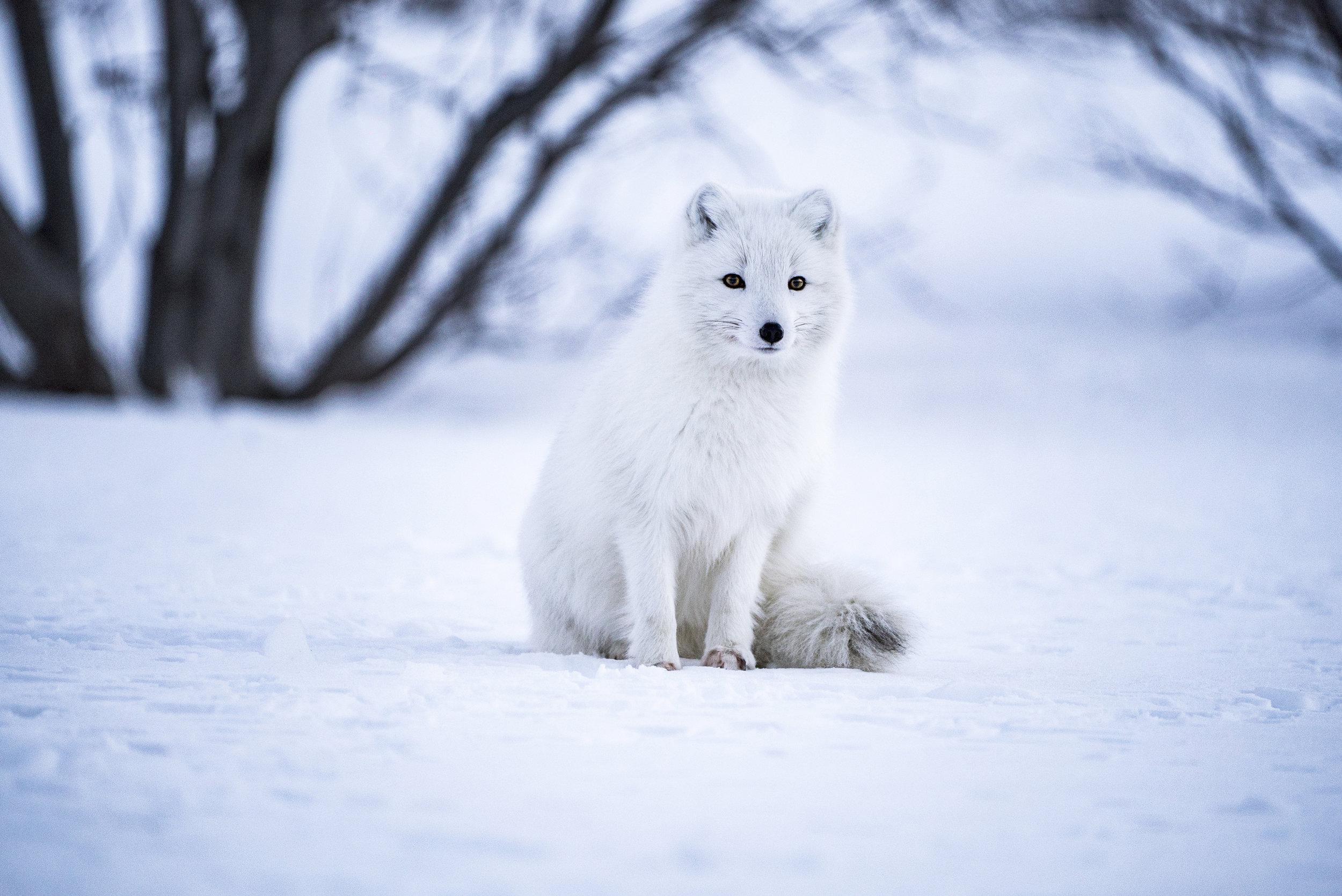 Foxy fox - So cute