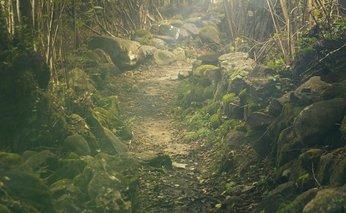 Hiking to improve mental health.