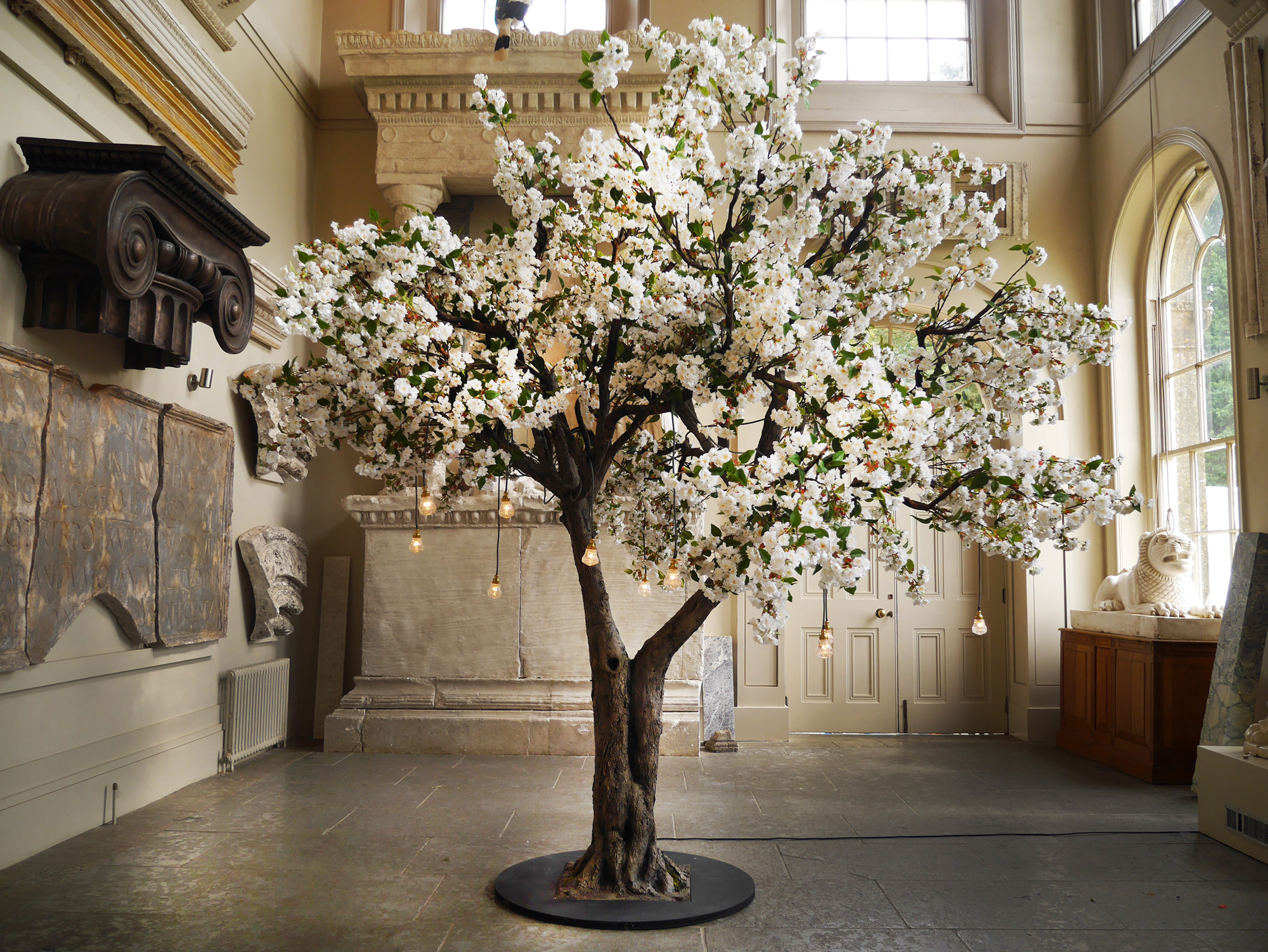 Indoor blossom tree Vowed and Amazed .jpg